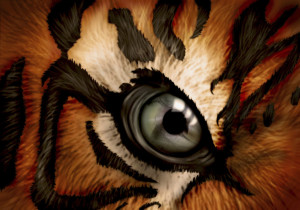 Eye Of The Tiger Pics the eye of the tiger
